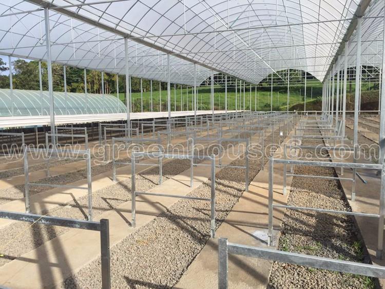 Polynesia Tomato Film Greenhouses.jpg